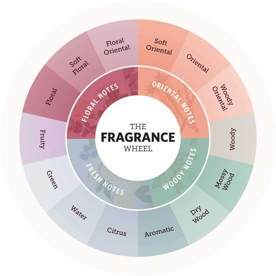 The fragrance wheel from FragranceX