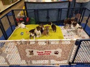 Help dogs in Montana.