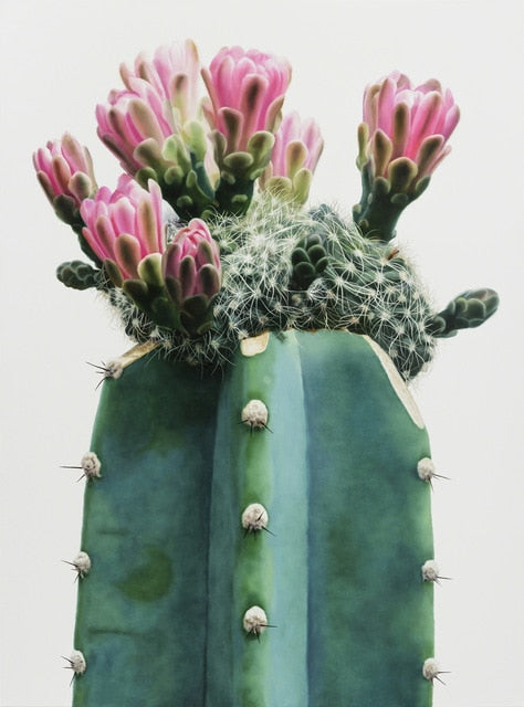 Cactus Flower Canvas Print - Burnt Spaces