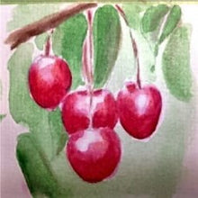 Load image into Gallery viewer, Hedelfingen Sweet Cherry