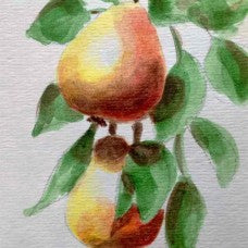 Golden Spice Pear