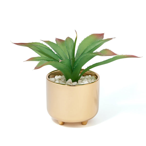 GREEN & POT AGAVE Small Gold