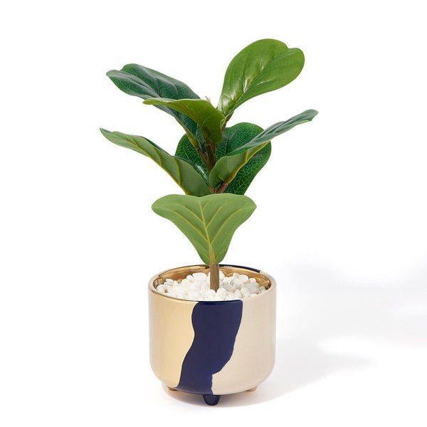 GREEN & POT FIDDLE LEAF FIG Small