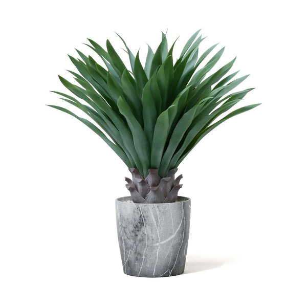 GREEN & POT AGAVE XL Gray