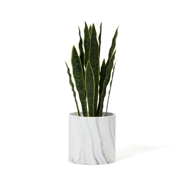 GREEN & POT SANSEVIERIA Large White