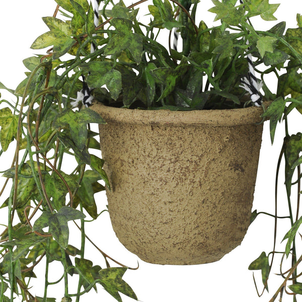 CLIMBING PLANTS Cup Ivy