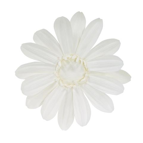 WALL FLOWER Gerbera White