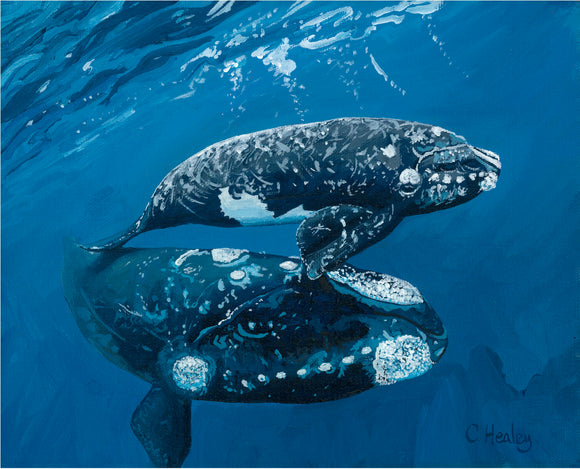Southern Right Whale and Calf