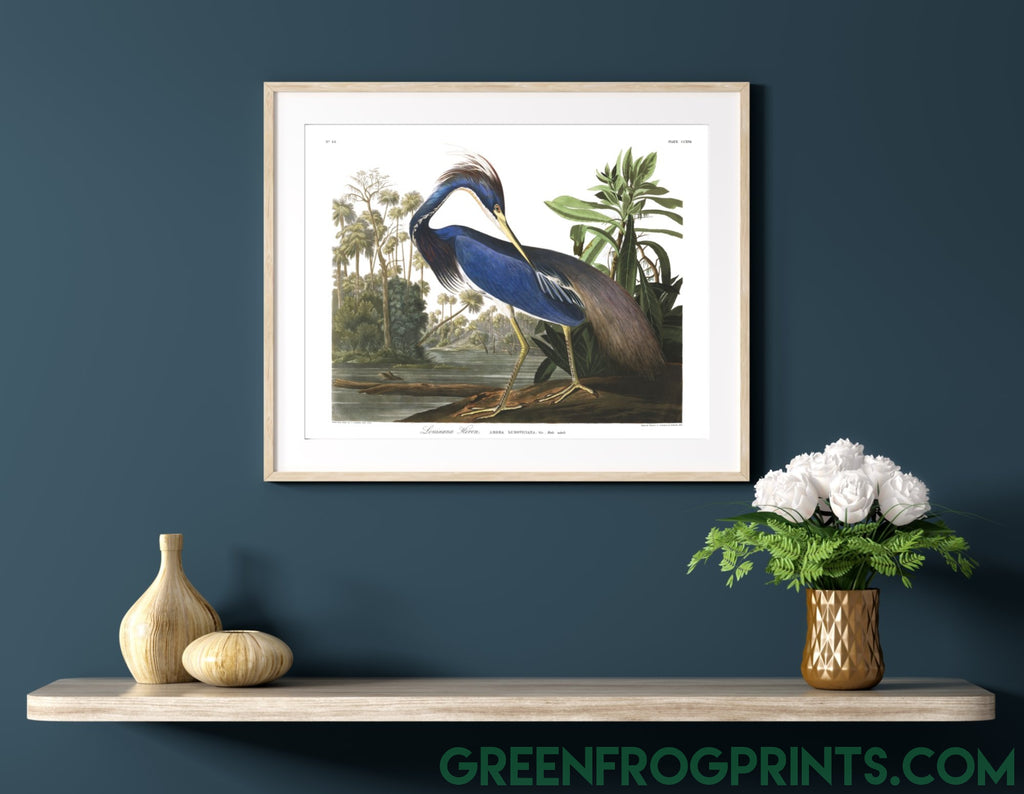Audubon Louisiana Heron Art Print | Beautiful High Quality Printed Canvas or Paper Artwork