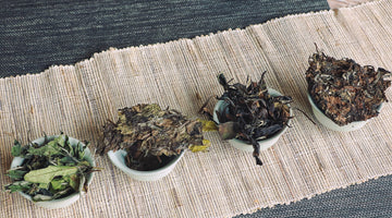 Aged White Tea and Its Delicious Secrets