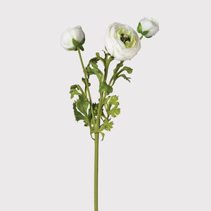 Coach House - Real Feel White Ranunculus
