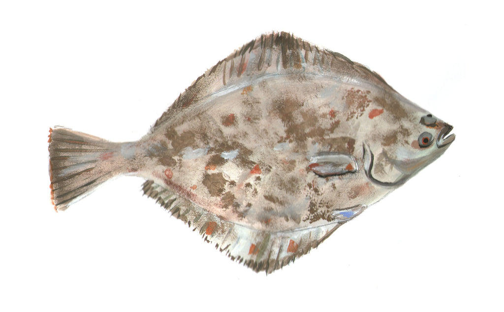 How to Troll the Pacific for a Starry Flounder