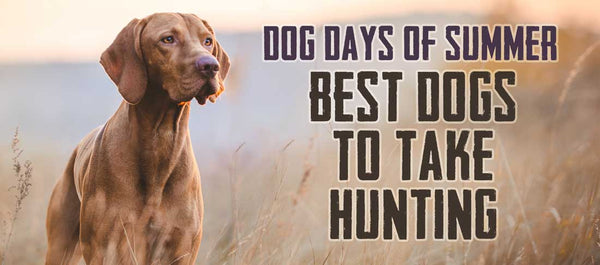 Gill McFinns picks for the best dogs to take hunting
