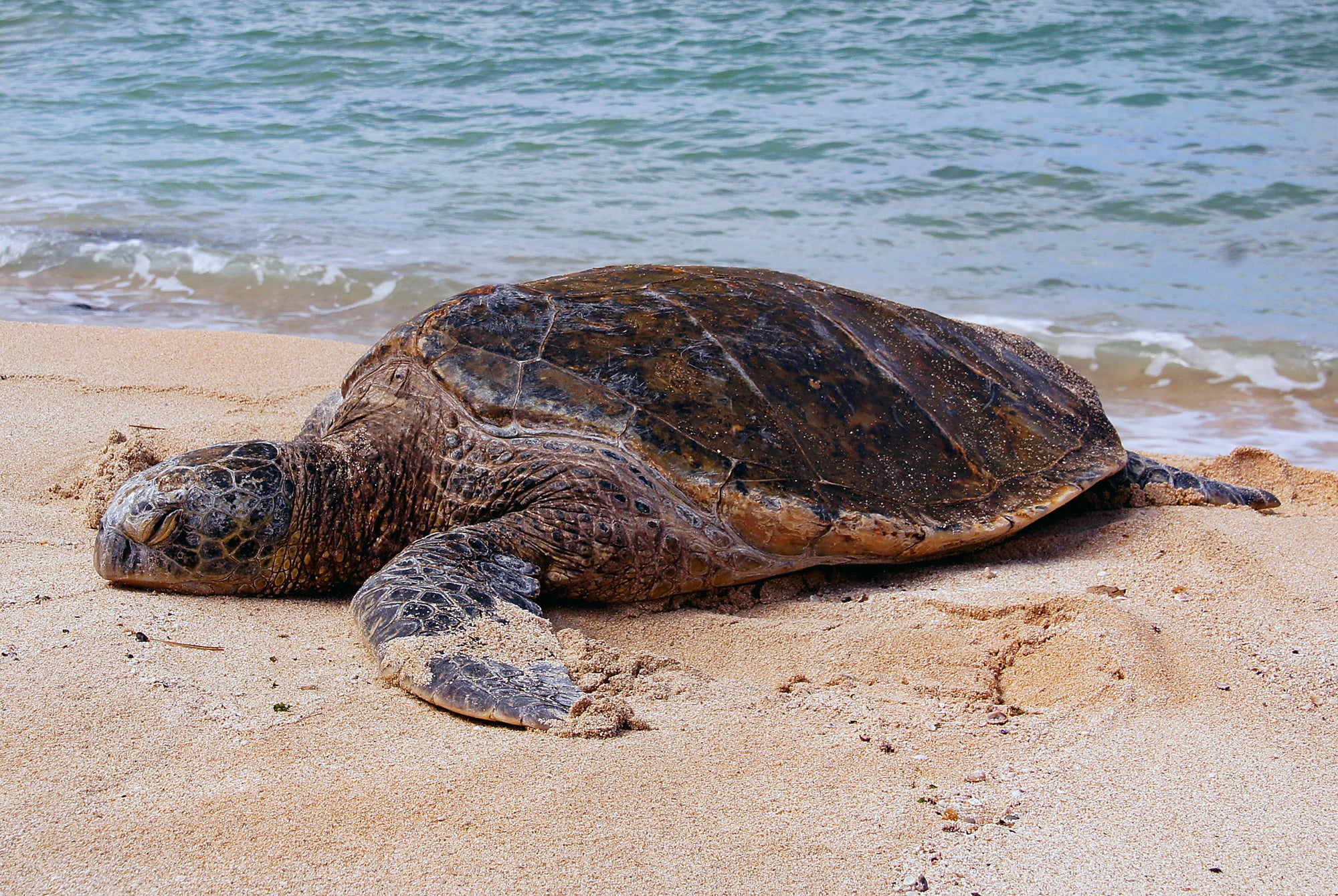 Do Sea Turtles Move Fast on Land?