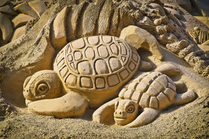 Fun Turtle Facts Sandy Ripple Blog