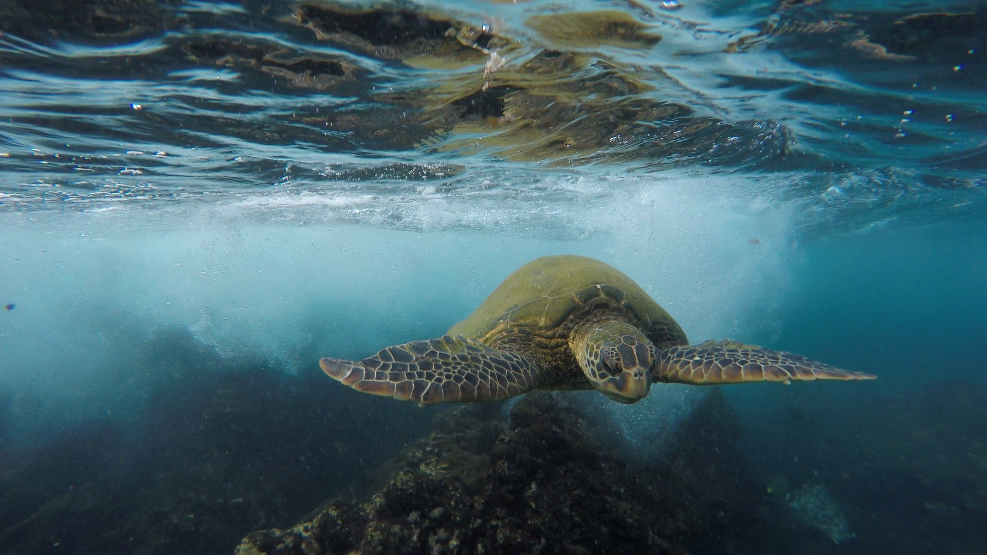 The Threat Of Sea Turtle Harvesting for Consumption