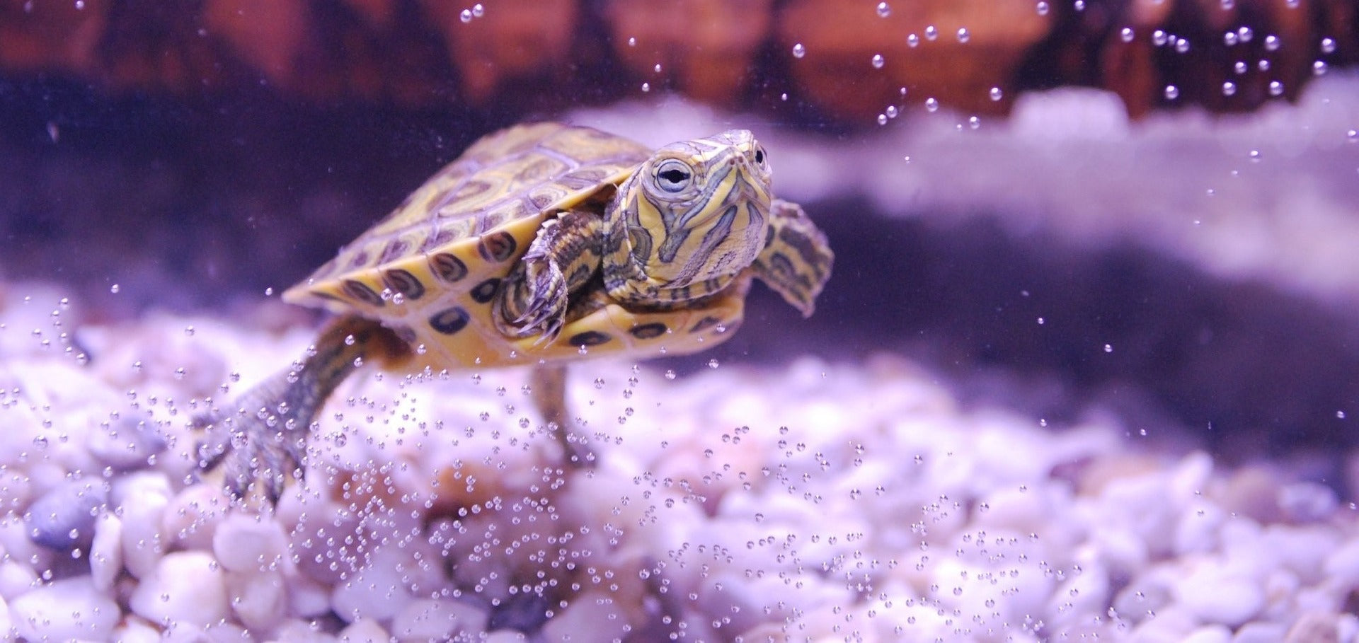 How many years do turtles live