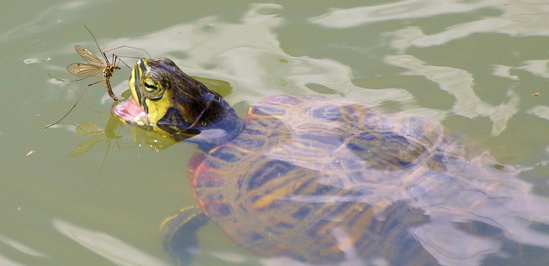 What Do Turtles Eat in Nature And How Do They Find Food?