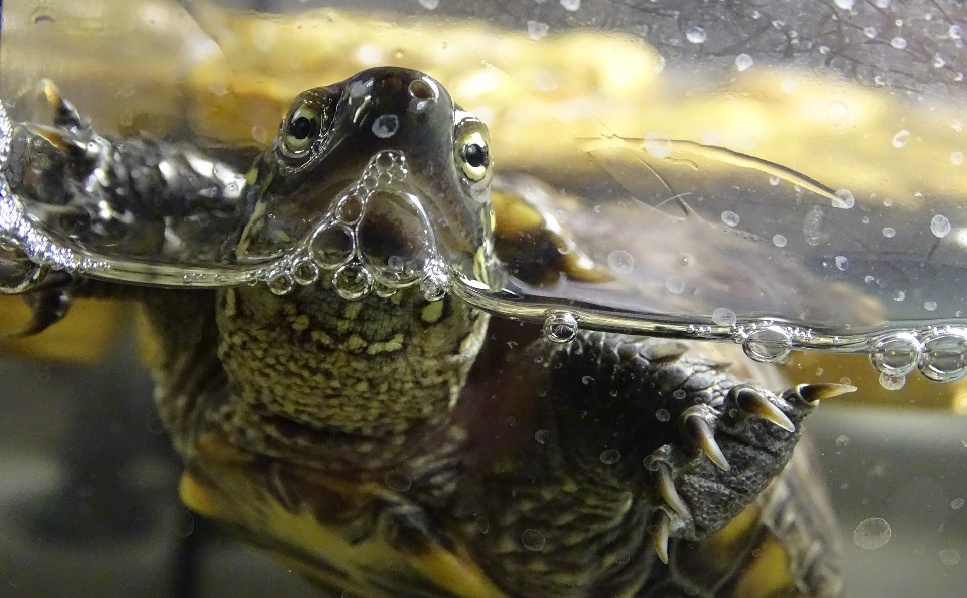 Why A Turtle May Not Be The Right Pet For You