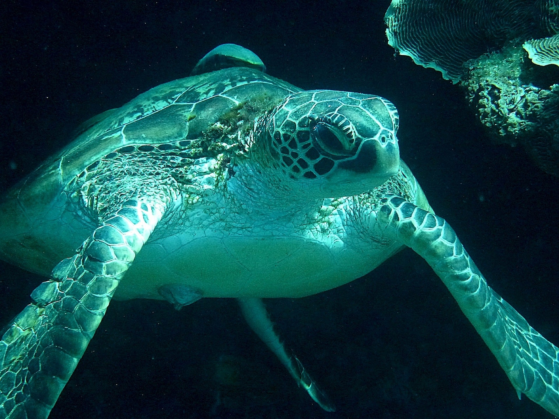 Are Sea Turtles Endangered?