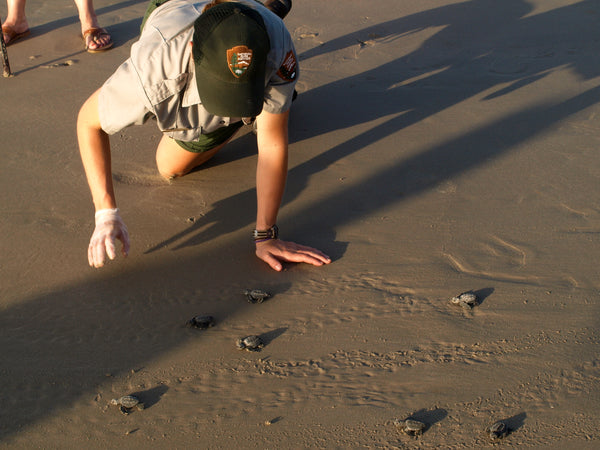 Conservation activities at shore sea turtle volunteer