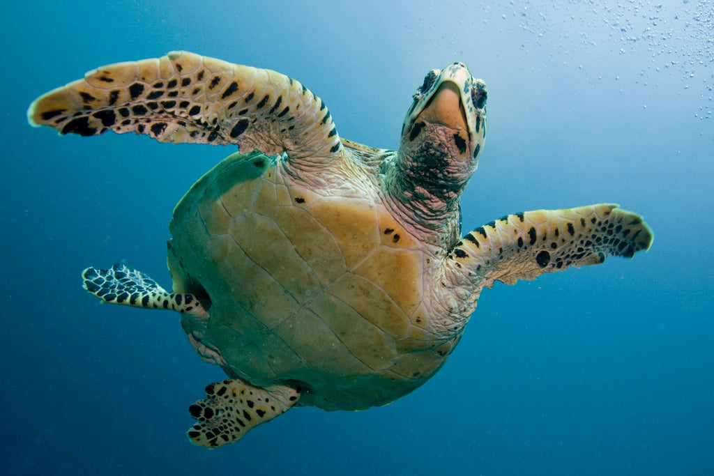 Sea turtle fun facts for kids age sandy ripple blog