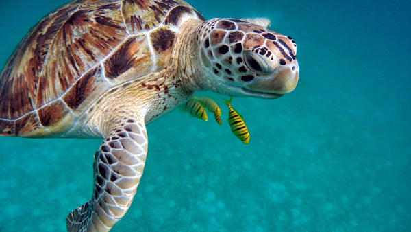 Sea turtle fun facts for kids