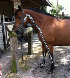 Equine Kinesiology Taping Non-Certification Course for Horse Owners - Online - Animal Rehabilitation Australia
