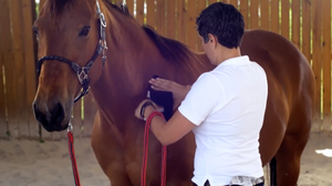 Equine Certification Bundle