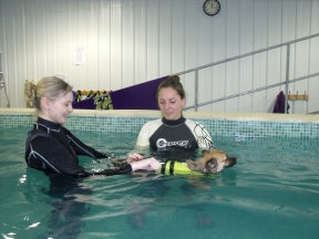 Certificate in Canine Hydrotherapy - by Distance - Animal Rehabilitation Australia