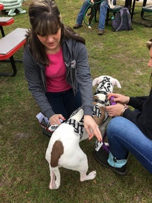 Dog Kinesiology Taping Course for Canine Professionals - Online - Animal Rehabilitation Australia