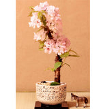 Japanese Sakura Seeds Rare Pink Cherry Blossom 10pcs Indoor Bonsai Flower Sakura Tree DIY - Lovely Seeds