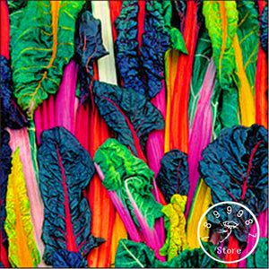 Swiss Chard Silverbeet 100pcs Fast Growing, Edible Plant,Vegetable - Lovely Seeds
