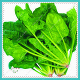 Spinach Seeds 200pcs Salad Leaves Good Taste Non-GMO - Lovely Seeds