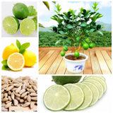 Lemon Lime tree Seeds 30pcs Green Healthy Food - Lovely Seeds