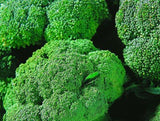 Broccoli Seeds 50pcs - Lovely Seeds