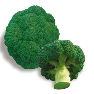 Broccoli seeds vegetable 10pcs - Lovely Seeds