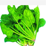 Spinach Seeds Salad Leaves Good Taste Non-GMO 100 seeds/pack - Lovely Seeds