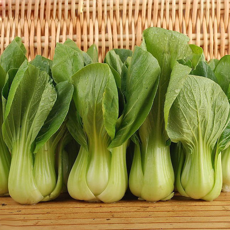 Bok Choy Chinese Cabbage Seeds 200pcs Lovely Seeds