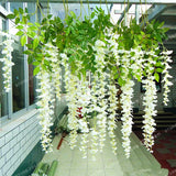 Wisteria Flower Seeds 10pcs - Lovely Seeds