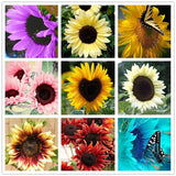 Sunflower seeds 40pcs for planting bonsai flower seeds 10 colors for home garden planting - Lovely Seeds