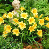 Daylily 100pcs Flower Seeds - Lovely Seeds