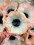 Japanese Anemone peony seeds 12PCS - 11 colors - Lovely Seeds