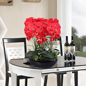 Phalaenopsis seed 20pcs interior decoration potted flowers - Lovely Seeds