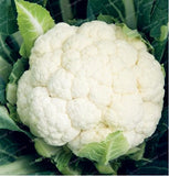Broccoli Cauliflower Seeds 50pcs Green Health Vegetables For Home Garden - Lovely Seeds