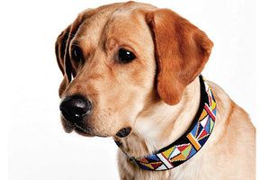 """Primary"" Beaded Dog Collar"