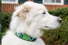 "Load image into Gallery viewer, ""Peacock"" Beaded Dog Collar"