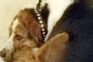 """Batik Bone Star"" Beaded Dog Collar"