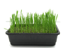 Load image into Gallery viewer, Wheat Grass Growing Kit
