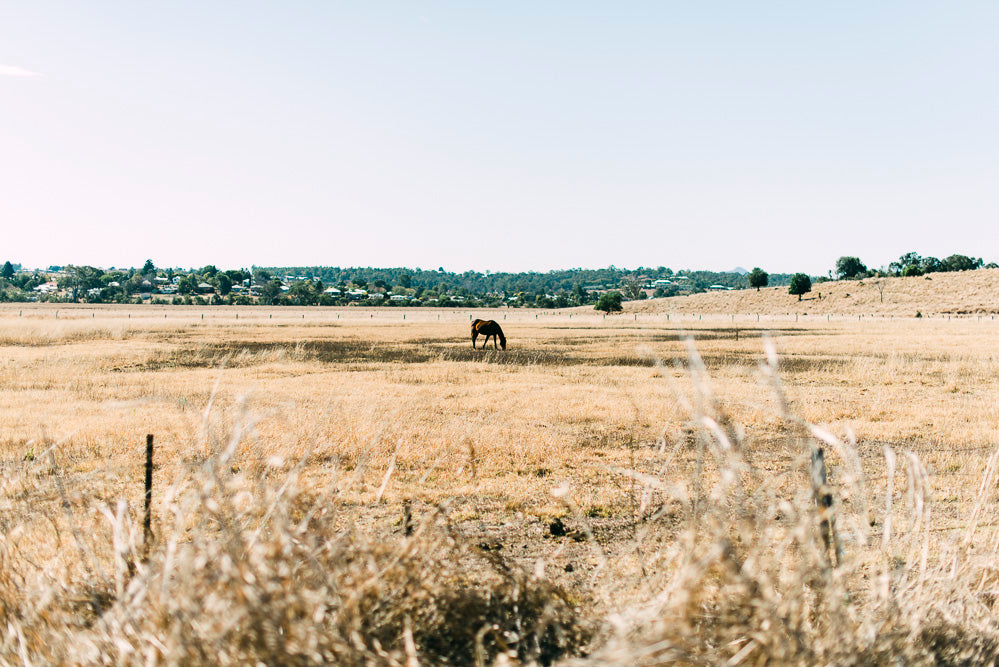 Lone Horse In Paddock Photographic Art Print